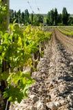 Agricoltura delle vigne Fotografia Stock Libera da Diritti