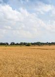 Agricoltura di agricoltura - culture dei campi del grano Fotografia Stock