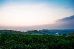 Agricoltura di alba Fotografie Stock