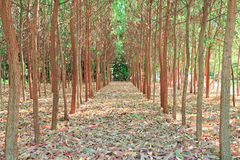 Agricoltura di albero. Fotografie Stock