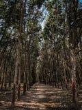 Agricoltura di albero di gomma ed agricoltura della piantagione Fotografie Stock