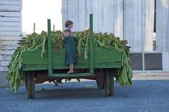 Agricoltura di Amish Fotografie Stock