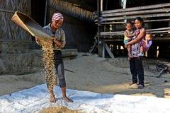 Agricoltura di Arunachal Pradesh Immagine Stock Libera da Diritti