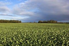 Agricoltura di autunno Immagine Stock Libera da Diritti