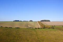 Agricoltura di autunno Fotografia Stock Libera da Diritti