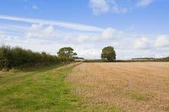 Agricoltura di autunno Fotografie Stock Libere da Diritti