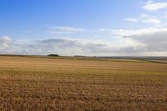 Agricoltura di autunno Immagini Stock Libere da Diritti
