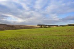 Agricoltura di autunno con il grande cielo Fotografia Stock