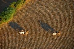 Agricoltura di Bagan dalla vista dell'uccello-occhio Immagini Stock
