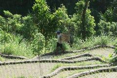 Agricoltura di balinese Immagini Stock