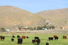 Agricoltura di California Immagine Stock Libera da Diritti