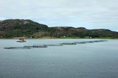 Agricoltura di color salmone Fotografia Stock