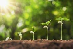 agricoltura di concetto che pianta punto crescente di semina in giardino con immagine stock libera da diritti