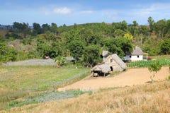 Agricoltura di Cuba Fotografie Stock