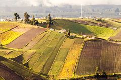 Agricoltura di elevata altitudine dell'Ecuador Fotografie Stock Libere da Diritti