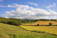 Agricoltura di estate Fotografie Stock Libere da Diritti