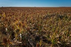 Agricoltura di Midwest Immagine Stock