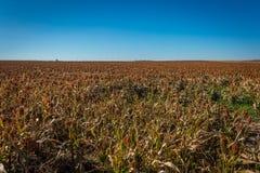Agricoltura di Midwest Fotografie Stock Libere da Diritti
