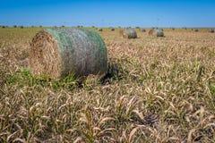Agricoltura di Midwest Fotografia Stock
