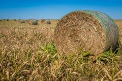 Agricoltura di Midwest Fotografie Stock