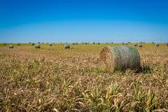 Agricoltura di Midwest Immagini Stock