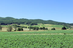 Agricoltura di montagna, alberi in natura Fotografia Stock