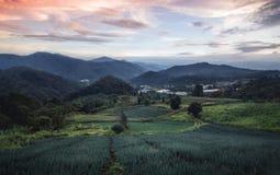 Agricoltura di montagna del prato della montagna a Sud-est asiatico nella sera nella stagione delle pioggie Immagine Stock