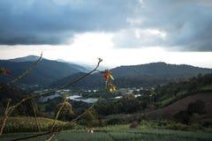 Agricoltura di montagna del prato della montagna a Sud-est asiatico nella sera nella stagione delle pioggie Fotografia Stock