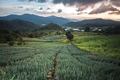 Agricoltura di montagna del prato della montagna a Sud-est asiatico nella sera nella stagione delle pioggie Fotografie Stock