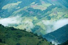 Agricoltura di montagna in Tailandia Immagini Stock