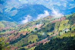 Agricoltura di montagna in Tailandia Immagine Stock