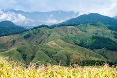 Agricoltura di montagna in Tailandia Fotografie Stock