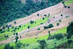 Agricoltura di montagna in Tailandia Fotografia Stock