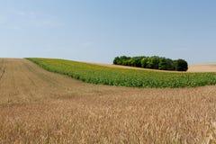 Agricoltura di paesaggio Fotografia Stock Libera da Diritti