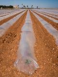 Agricoltura di Polytunnel in Spagna Fotografia Stock Libera da Diritti