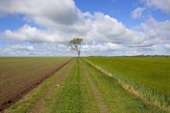 Agricoltura di primavera Immagine Stock