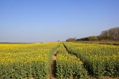 Agricoltura di primavera Fotografie Stock Libere da Diritti