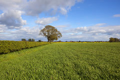 Agricoltura di primavera di Yorkshire Fotografia Stock Libera da Diritti