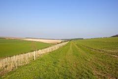Agricoltura di primavera di Yorkshire Fotografia Stock