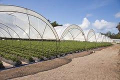 Agricoltura di produzione della serra Fotografia Stock Libera da Diritti