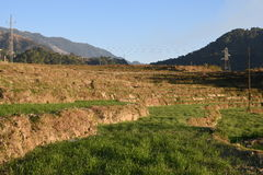 Agricoltura di punto del grano nello stato collinoso Himachal in India Fotografia Stock