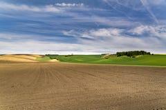 Agricoltura di recente seminata frantumata con i prati ondulati immagini stock libere da diritti