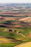 Agricoltura di Rolling Hills del terreno coltivabile della collina di Steptoe di regione di Palouse Immagine Stock Libera da Diritti
