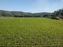 Agricoltura di verdure Immagine Stock Libera da Diritti