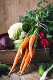 Agricoltura di verdure Barbabietole, rudishes, cavolfiore e carote Fotografia Stock Libera da Diritti