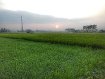 Agricoltura di vista di mattina Fotografia Stock Libera da Diritti
