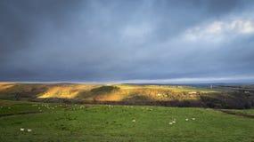 Agricoltura di Yorkshire Immagini Stock
