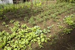Agricoltura domestica Fotografia Stock Libera da Diritti