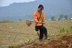 Agricoltura, donne di Chao Doi. Fotografia Stock