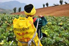 Agricoltura, donne di Chao Doi. Fotografie Stock